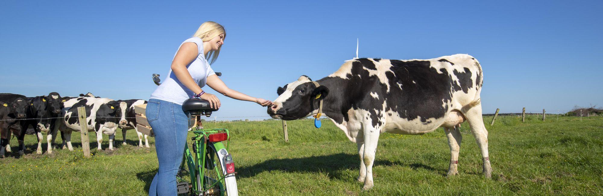 Ausflug mit dem Fahrrad zu Kartoffel und Kuh
