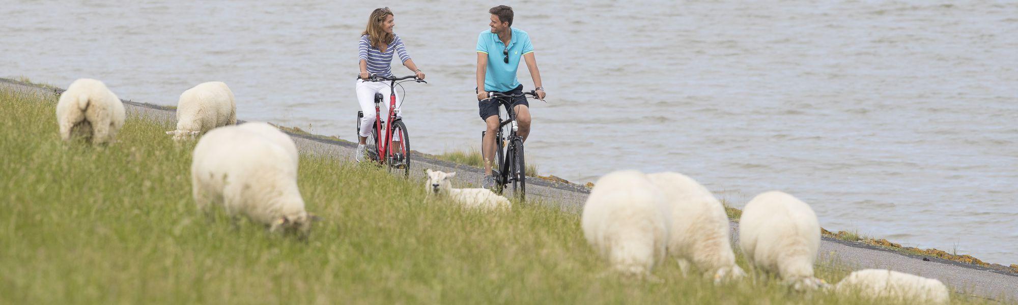 Radfahren in und um Neuharlingersiel