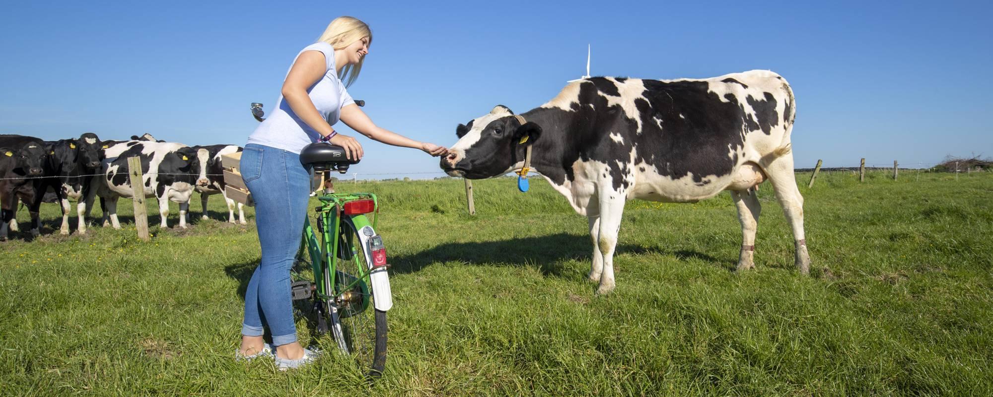 Fahrrad-Tour zu Kartoffel und Kuh