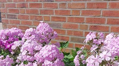 Blumenbeet Waschhaus Backhus Neuharlingersiel